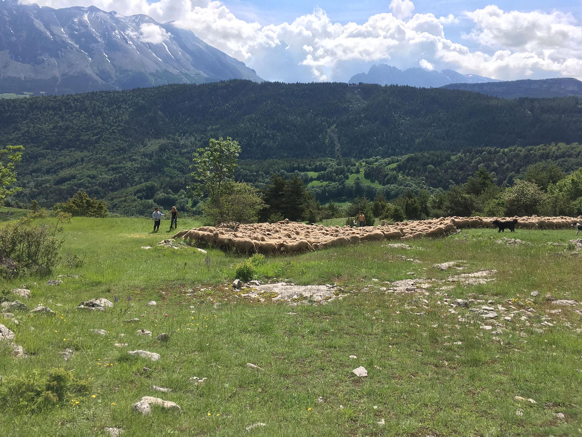 Vie des bergers dans les montagnes